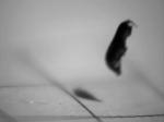 Jumping amphipod closeup 4 11_3